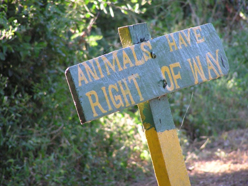 Animals-have-right-of-way