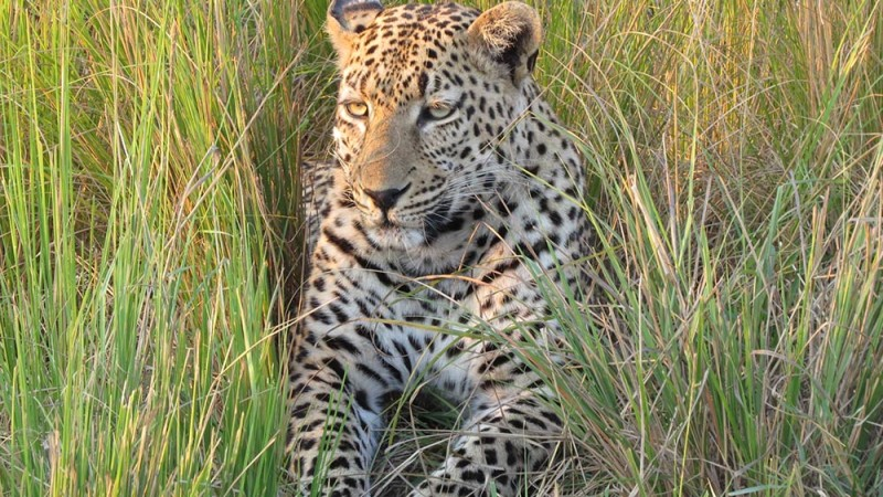 Relaxed-Leopard