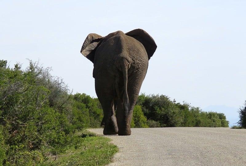 elephant-1659664_960_720