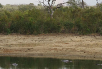 The Savanna Plus Wildlife Safari in the Sabi Sands Never Disappoints!