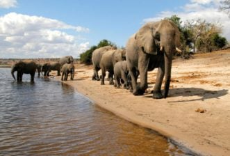 5 Phenomenal Reasons to Travel to Africa in 2020