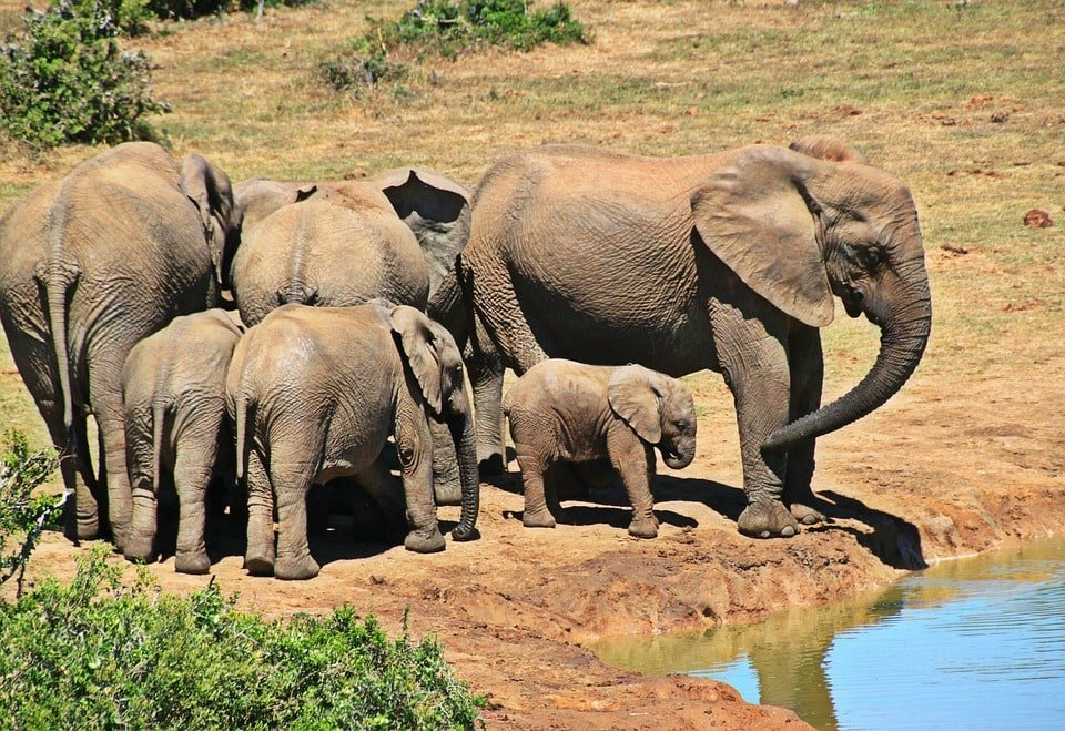 herd of african elephants at water hole