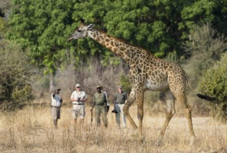 Why You Should Go on a Safari to Africa