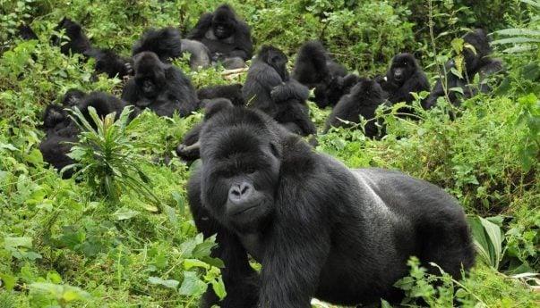 Gorilla Trekking Luxury Safari
