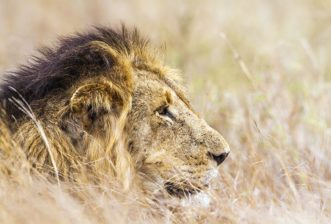 Amazing Facts About African Wildlife