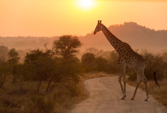 Can I book a safari directly without using a travel agent?