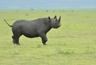 """Call to arms"" for Africa's endangered iconic animals"
