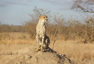 Some of Africa's Most Interesting Animals and Where to Find Them – Leopard