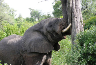 Some of Africa's most interesting animals and where best to find them – African elephants