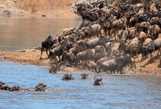 Kenya: Where the Safari Was Born