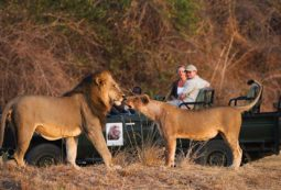 Luxury Safari in Zambia in Africa