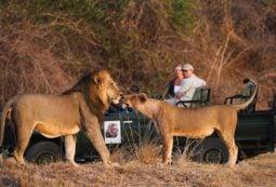 Luxury Safari in Zambia in Africa
