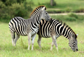 Best Locations To See Wildlife In Africa