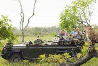 lions on Australian safari authentic travel experience