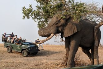 Four Facts about African Elephants We Bet You Didn't Know