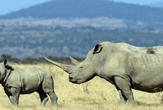 A collection of poems for the rhino