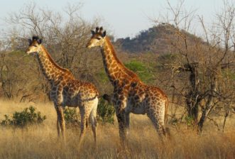DESTINATIONS AFRICA TRAVEL UPDATE
