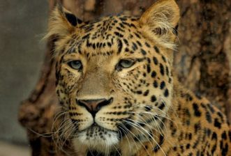 Sabi Sands: The Leopard Viewing Capital of the World