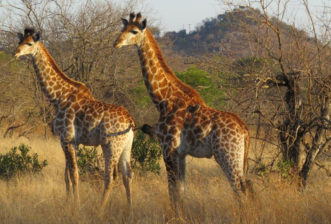 You Deserve An African Safari Experience with SAVANNA PLUS 2019