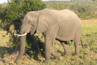 Four facts about baby elephants we bet you didn't know