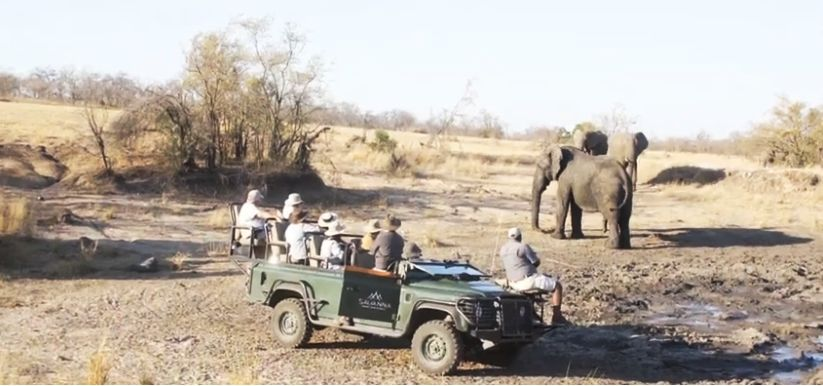 viewing elephants while on safari to south africa from australia