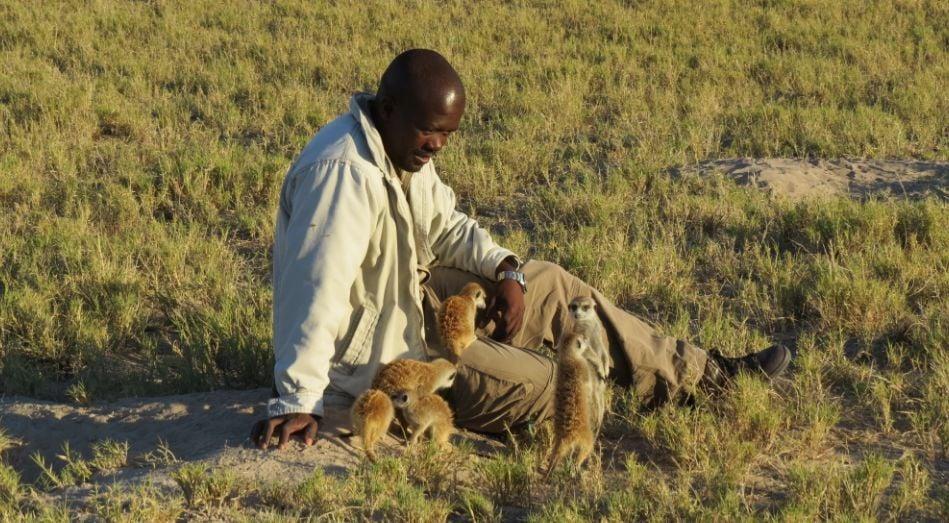 african man sitting with meerkats in botswana africa