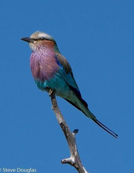 Birdlife hwange zimbabwe