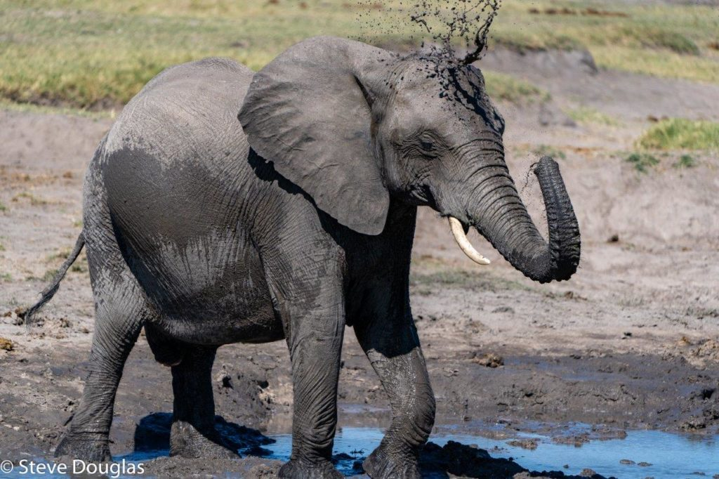 Elephant splashing water Hwange National Park Zimbabwe South Africa