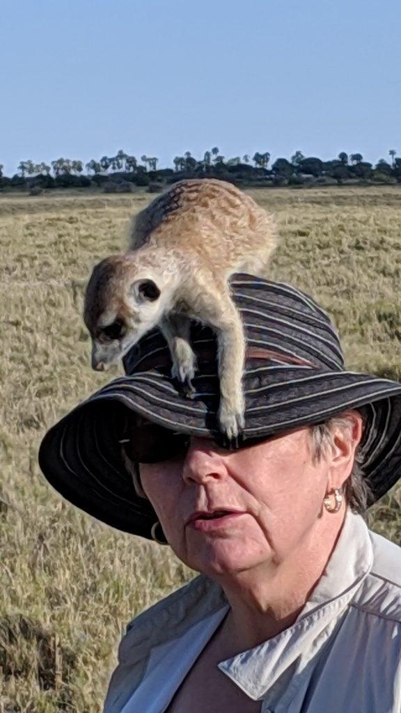 Hillary-in-Botwana-Africa-with-meerkats