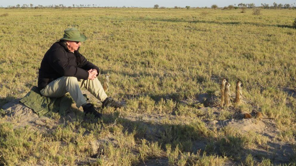 foraging meerkats botswana africa