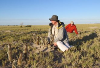 The Complex Societies of the Gregarious Meerkats