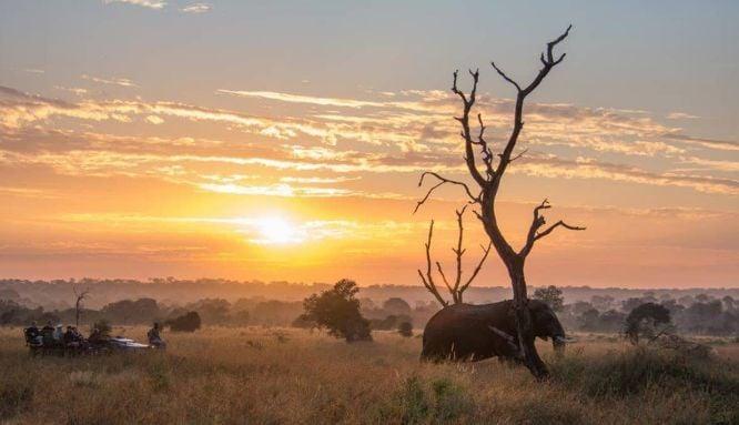 Sabi Sabi African safari trackers