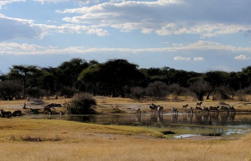 The Hide waterhole tented accommodation Hwange Zimbabwe1