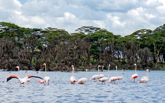 Flamingos Lake Naivasha Kenya luxury african travel safari
